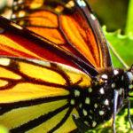 数億羽の「幻の蝶」が飛び交う!アンガンゲオの奇跡の景色
