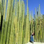 Instagramで見た謎の巨大サボテン林は、メキシコのオアハカにあった!