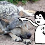 メキシコのアミーゴ④ 絶滅危惧種を違法でペットにする男、ホセ