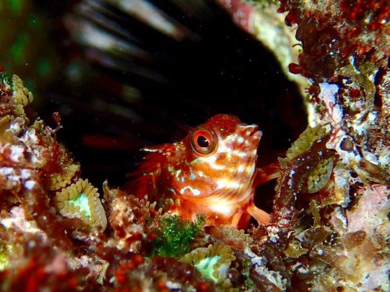 ダイビング中、岩場で見つけた小魚